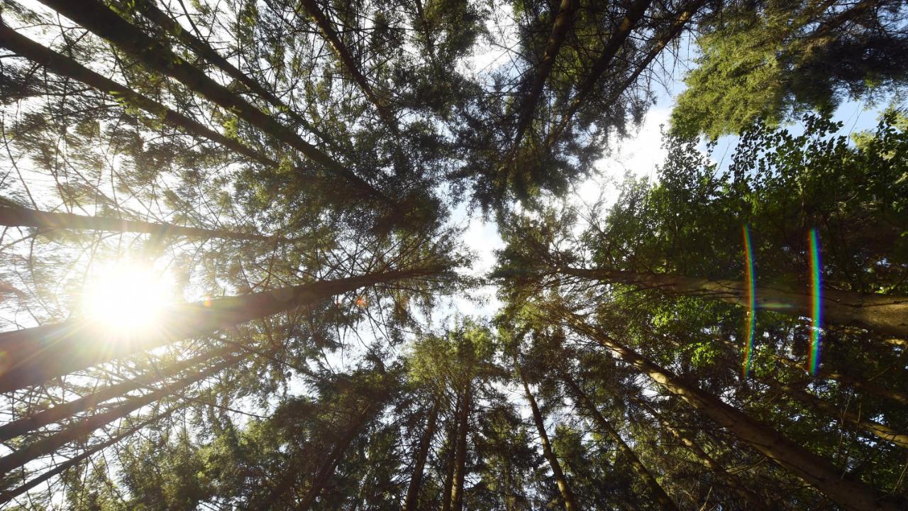 """Ursula von der Leyens """"Green Deal"""": Europas Wälder sollen Klima retten"""