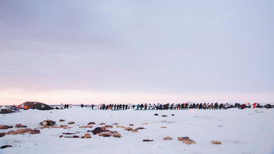 Die Bewohner von Utqiagvik ziehen einen Grönlandwal an Land