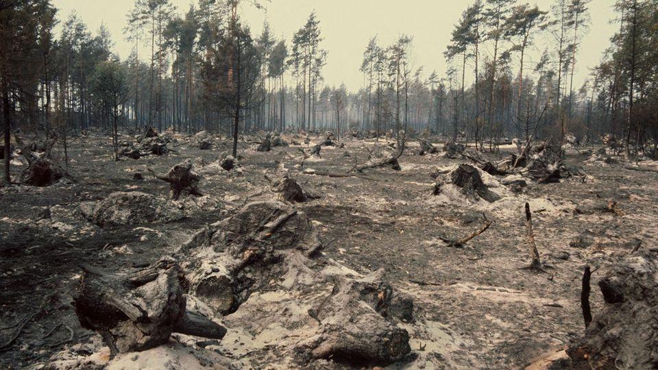 Der ausgebrannte Wald im Naturpark Südheide 1975