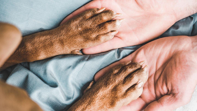 Hunde sind in Sachen Pfotenpflege auf ihr menschliches Gegenüber angewiesen