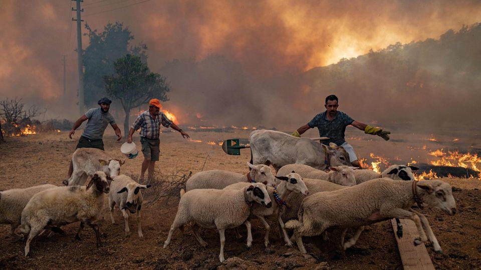 Feuer in Mugla